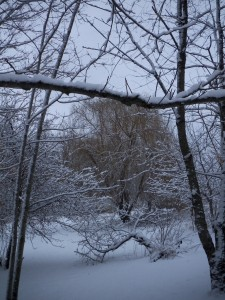 It was pretty cold but not too cold, and the perfect, loveliest, lightest snow had settled on everything.