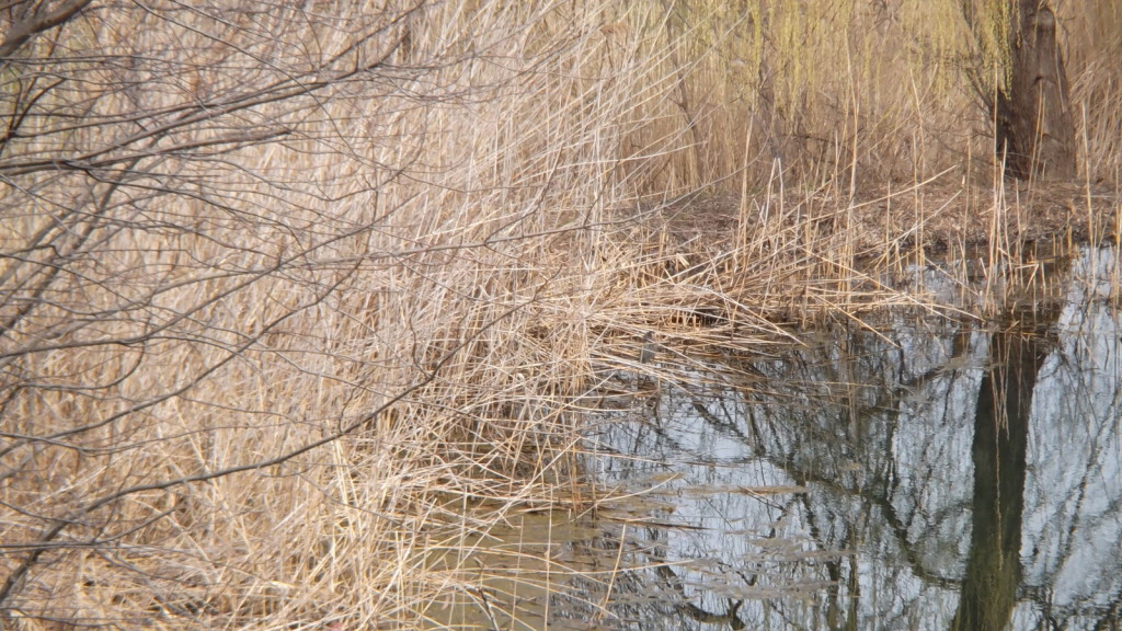 View of the Heron in the reeds