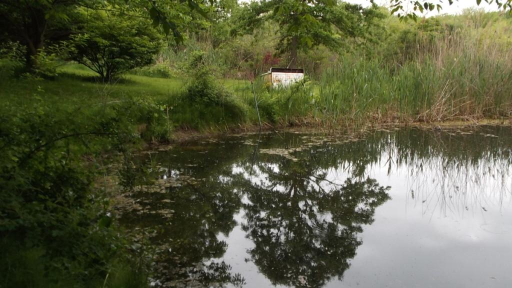 Pond - serene, yes?