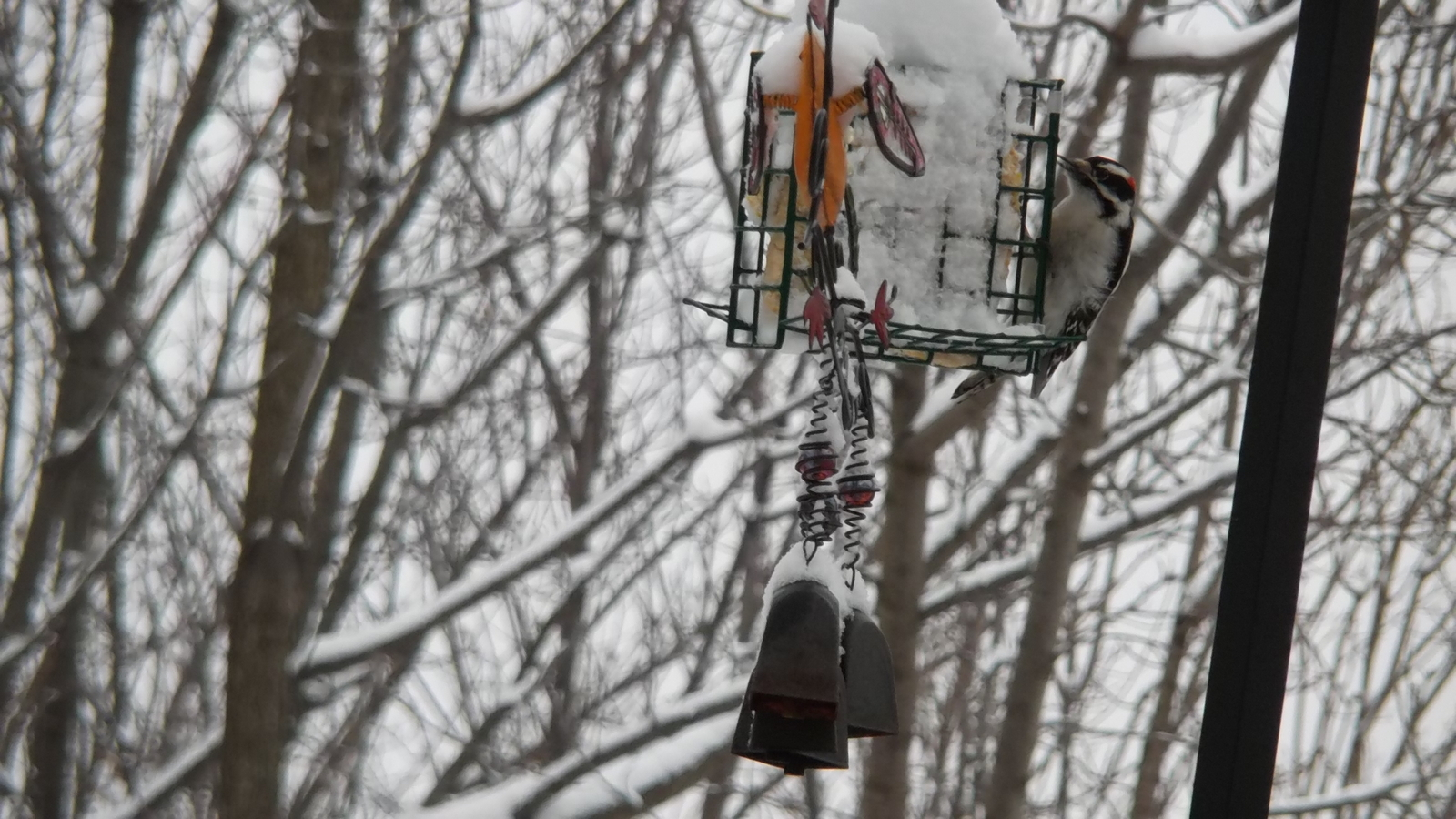 Wood pecker?, suet, wind chimes and WINTER