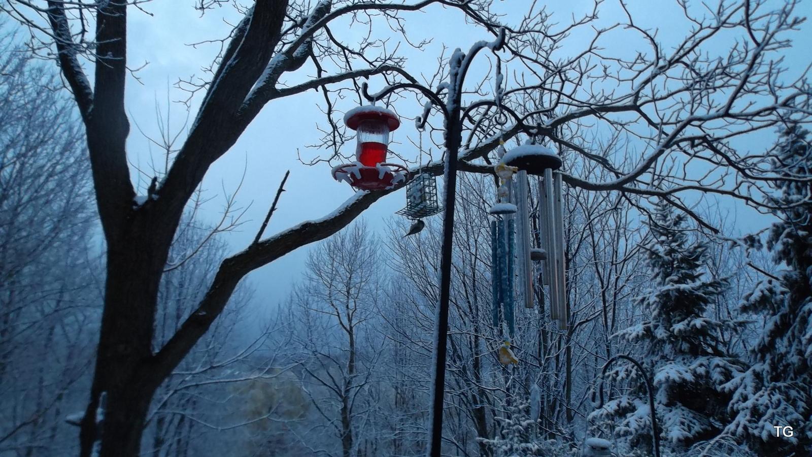 Bird under suet feeder in new spring snow