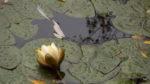 The flowers sag, in nov