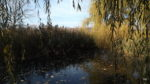 More pond - today