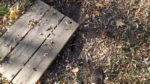 Between my foot and the wood, there's a metal plate covering an old well - it's rusted through - hence the wood cover I put there.