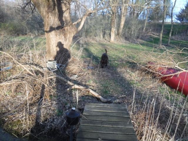 A shadow, mine, and a dog - Charlie.